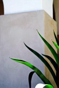 Outdoor details orton